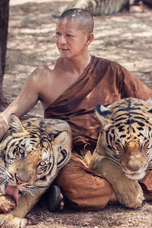 ilaurens: Tiger monk - By: (Rickuz)
