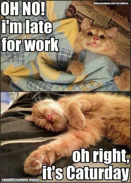 Thank goodness for caturday