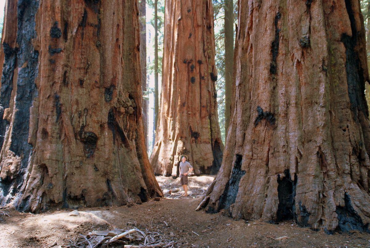 Yosemite National Park Sure Is A Sight To Behold Nemzeti