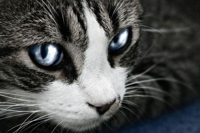 Waterclan Cats Waterclan Warrior Cats Warrior Cat Names