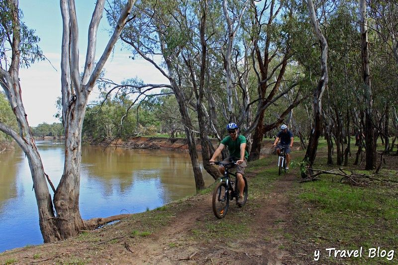 mountain biking riding in the River Red Gum National Park