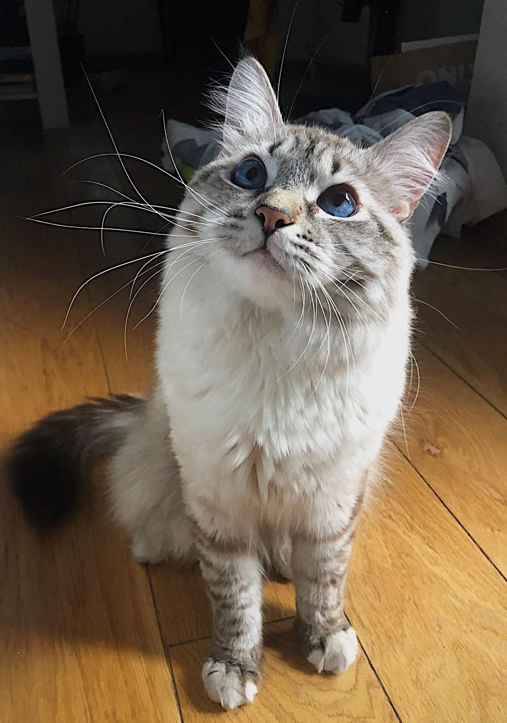 Meet Kali One Year Boy That We Thought Was A Girl Until Six Months Old Therefore A Girls Name By Akibejbe Wha Cats And Kittens Cute Animals Funny Cat Pictures