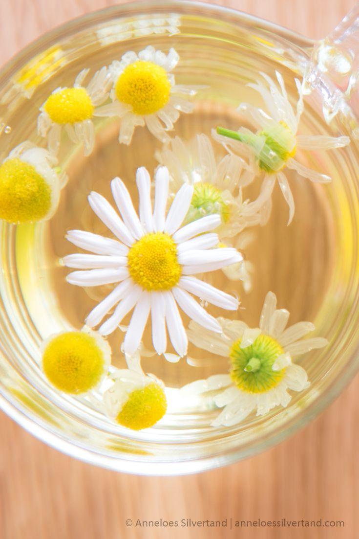 Fresh chamomile tea recipe chamomile tea chamomile