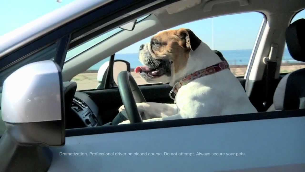 The Beach. Subaru Dog Tested. Dog Approved. Commercial