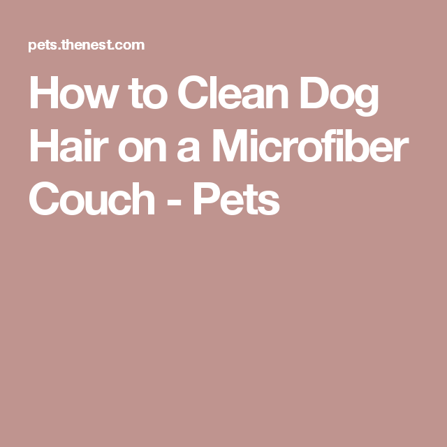 Awe Inspiring How To Clean Dog Hair On A Microfiber Couch Helpful Things Alphanode Cool Chair Designs And Ideas Alphanodeonline