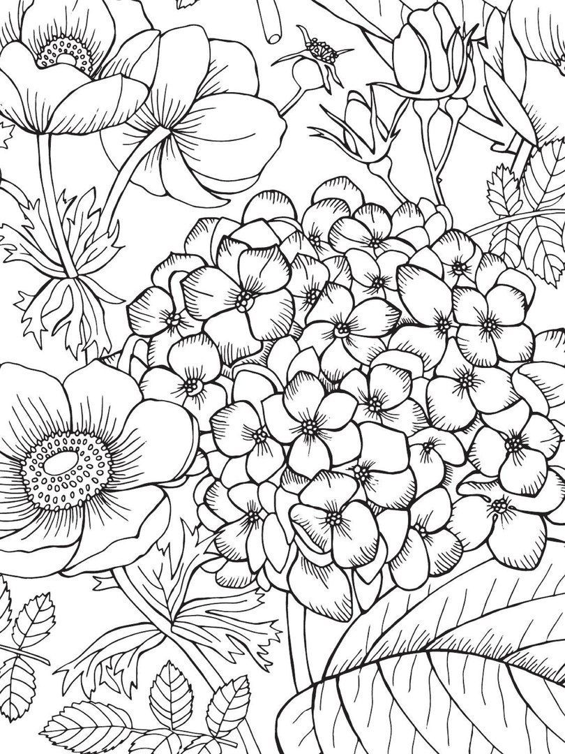 Blank coloring pages, Printable adult coloring pages