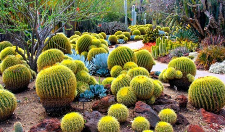 Bien-aimé Cactus et plantes grasses extérieur pour un jardin facile à  XV17