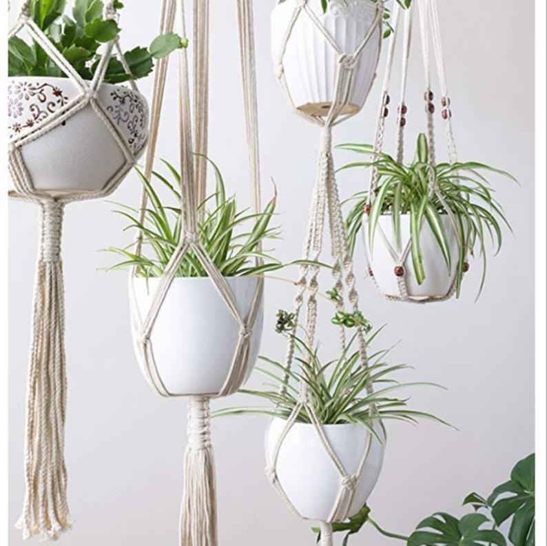 How to arrange your indoor plants ?