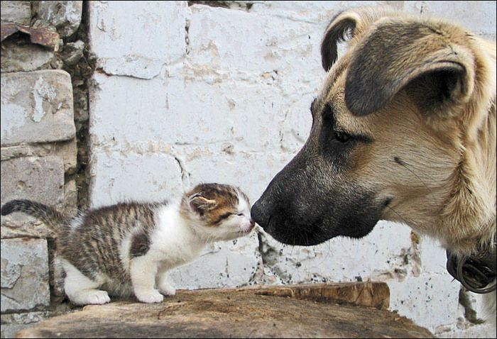 Cats and Dogs - Best Friend Pictures   Cat Pictures and Videos
