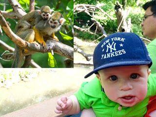 Fordham News: Kids Love New Zoo Exhibit