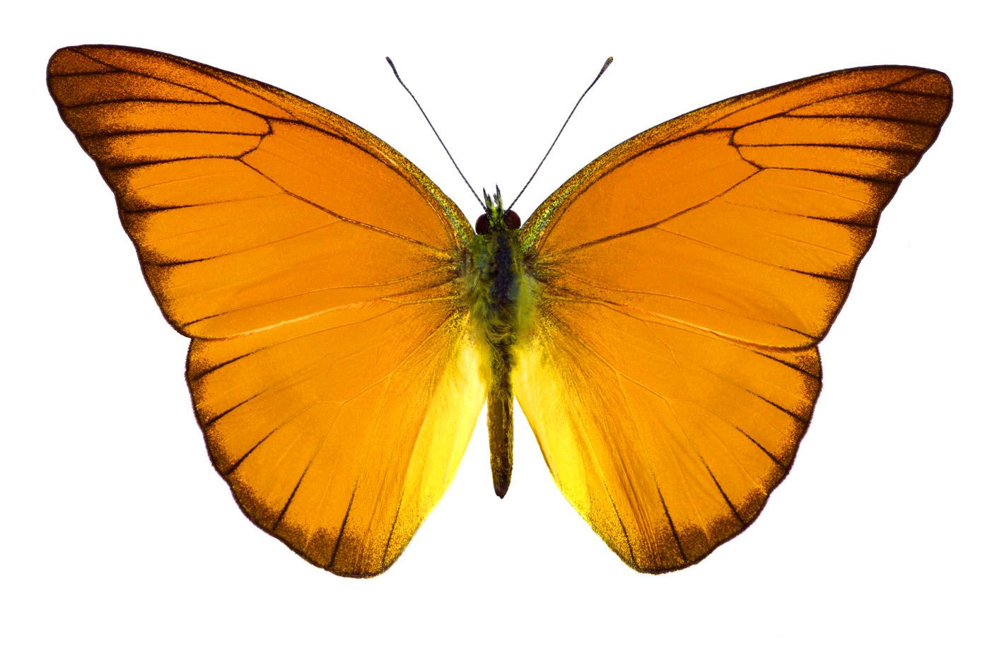 butterflies bring color and joy with them the colors of the