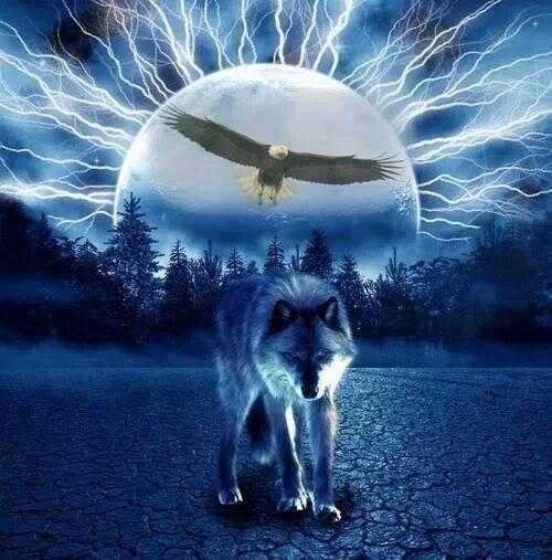 Citaten Kunst Yang Bagus : Pin von su sanne auf wolves pinterest wolf und traumfänger