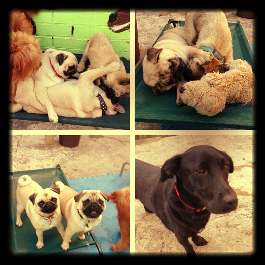 DOGUE Day Care Fun!!! | Dog grooming, Luxury dog