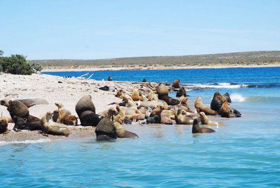 Patagonia austral argentina.