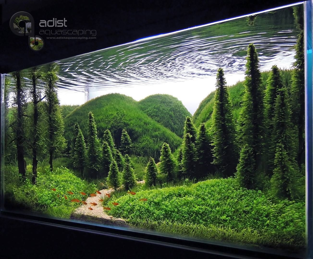 Whisper of the Pines | Aquarium landscape, Amazing ...