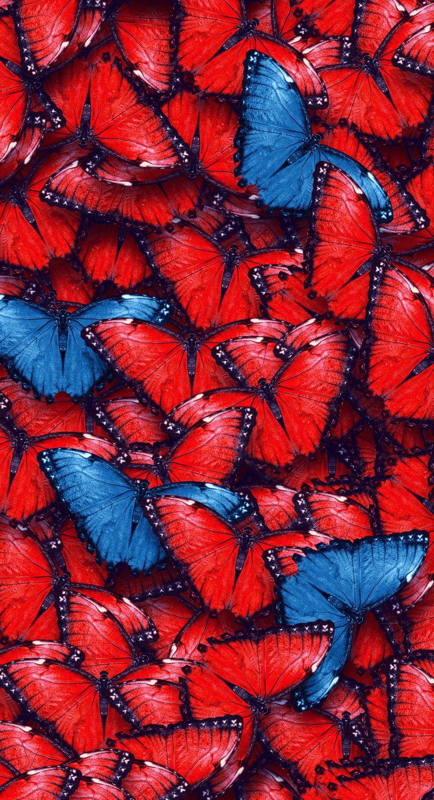 Wallpaper | Butterfly wallpaper, Red roses wallpaper, Red ...