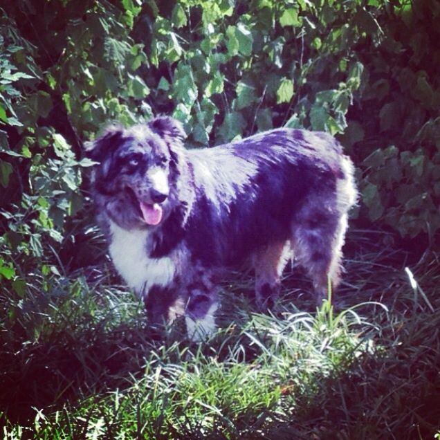 Lost Dog Female Little Elm Tx Usa 75068 Losing A Dog Dogs Little Elm