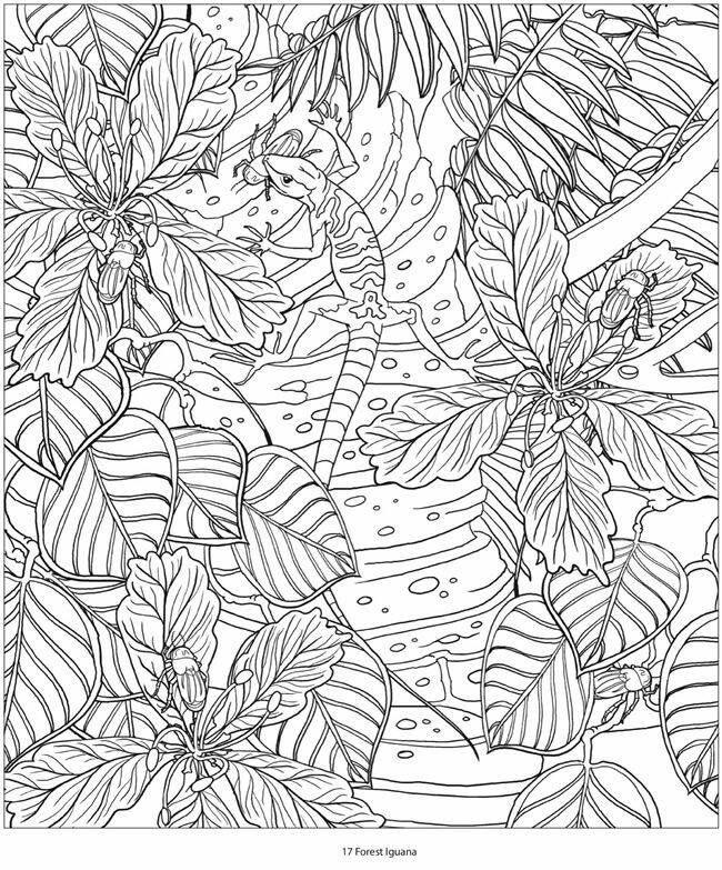 Pin de marjolaine grange en reptile   Pinterest
