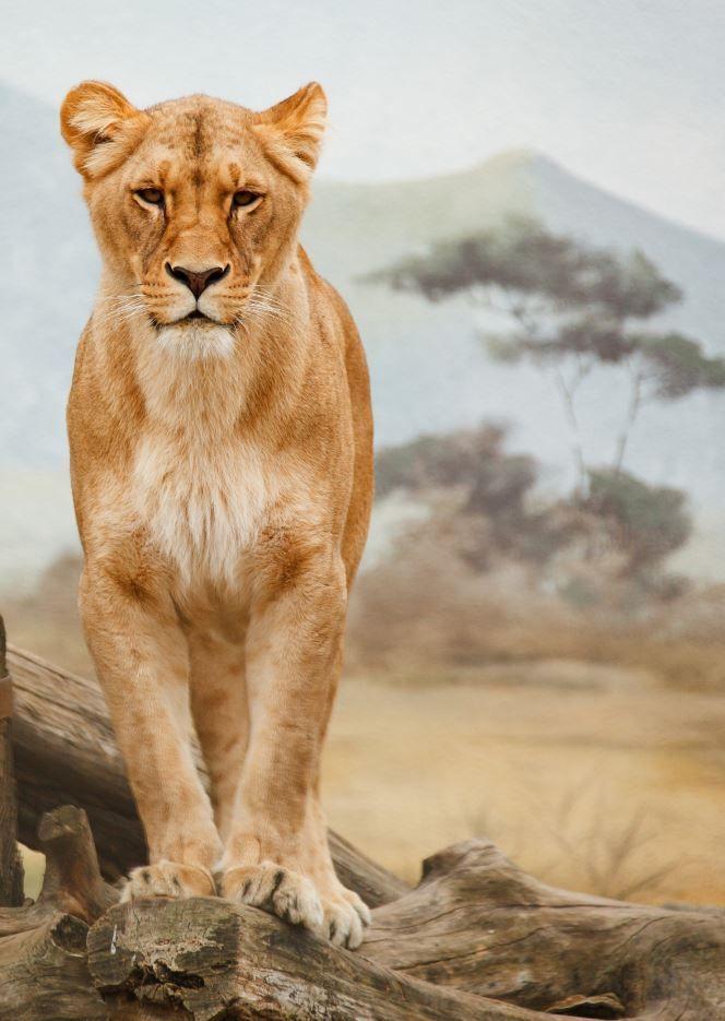 Photo of 26 Atemberaubende wilde Tiere #Tiere #Trocknend #Spiel #Löffel #Wild