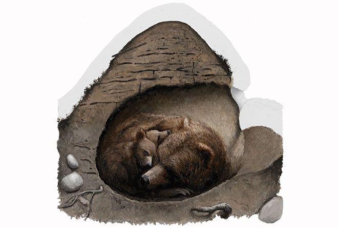 Eläimillä on keinonsa selvitä Pohjolan talvioloista. Osa rakentaa pesän ja kotiutuu, toiset viettävät kulkurin elämää ja saalistavat. Miten kettu valmistautuu talven pakkasiin?