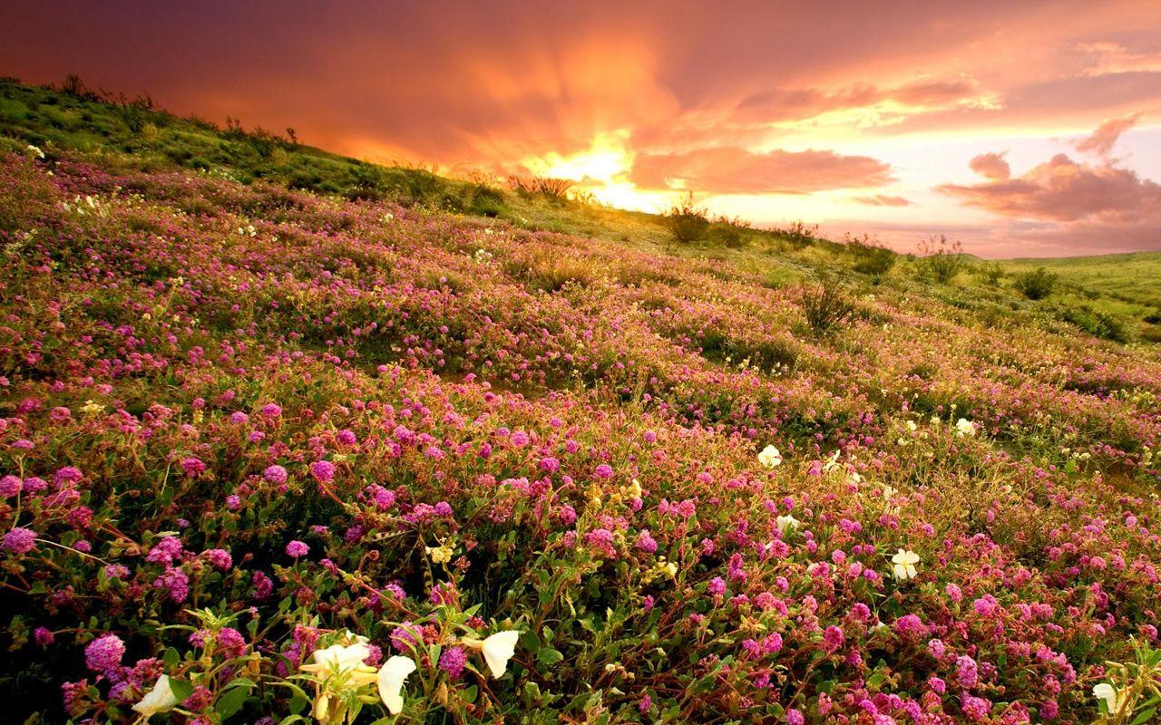 Pictures of hawaiian flowers hawaiian flowers pictures 1280x800 pictures of hawaiian flowers hawaiian flowers pictures 1280x800 izmirmasajfo