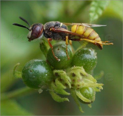 """Bild von ANOWI - """"Biene"""""""
