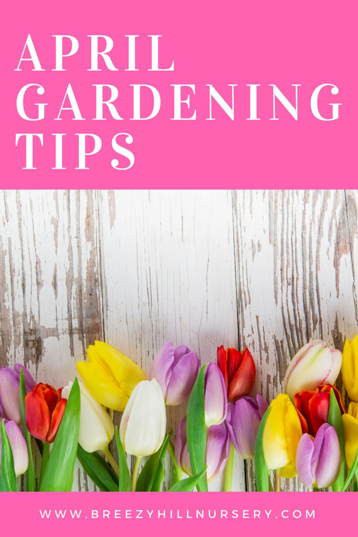 April Gardening & Landscaping Tips is part of garden Pool Tips - April Gardening Tips Weeds Perennial weeds and winter annuals are active now  Chickweed, mouseear chickweed, annual bluegrass, oxalis must be controlled now to prevent reseeding  Hoe or pull the weeds as soon as you see them