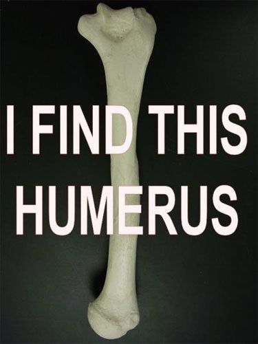 Do you find this humerus?