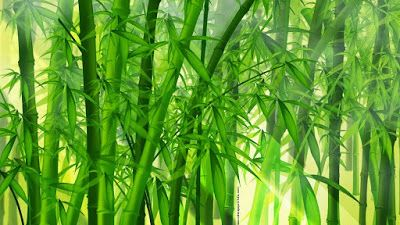Bamboo Forest Hd Desktop Wallpape Projects To Try Pinterest