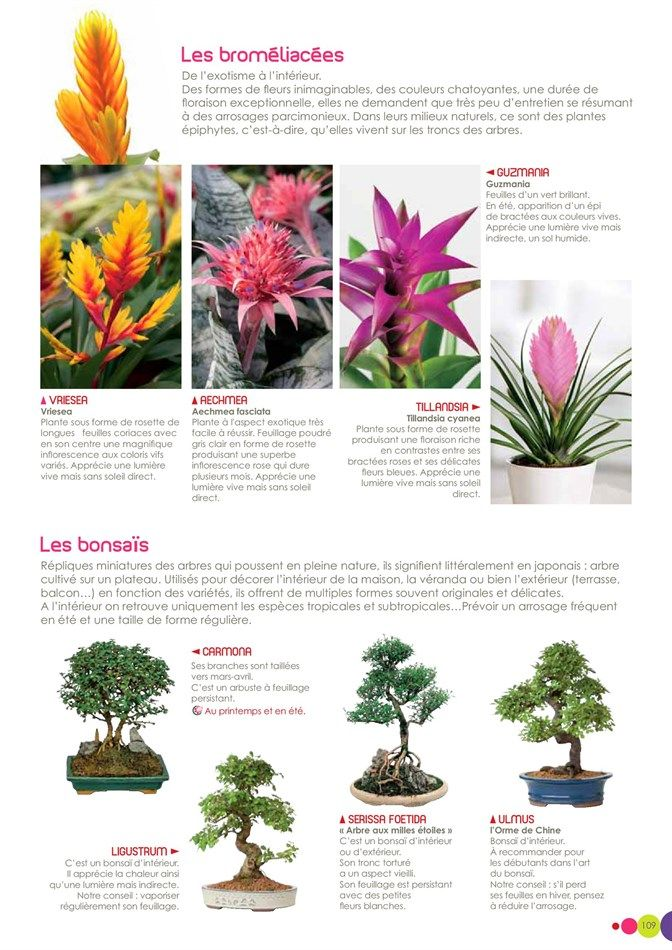 Plantes · catalogue et promotions de villaverde