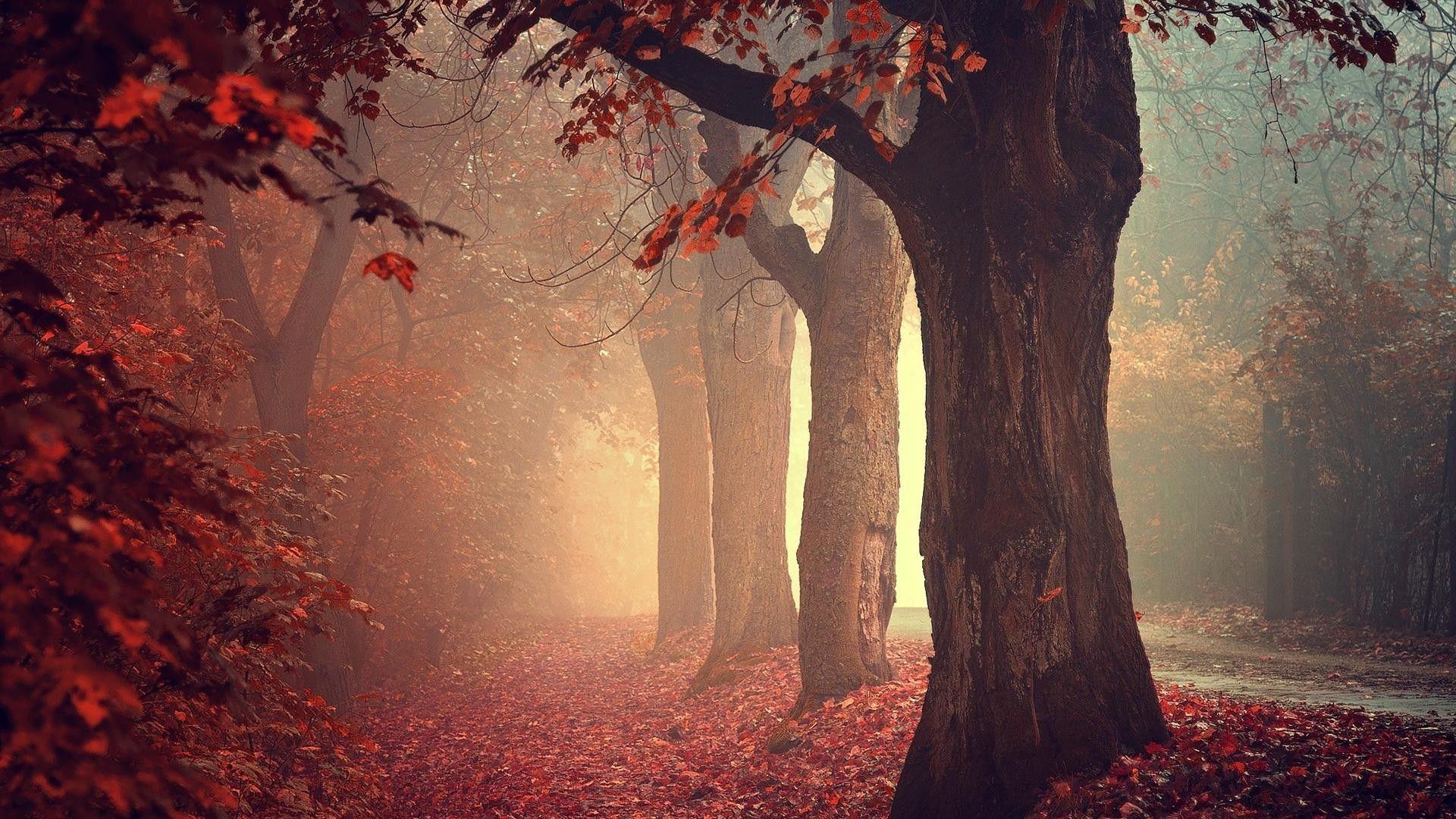 C'est l'automne...  3a994d60f23ee4c6c4fb50dcee1fa561