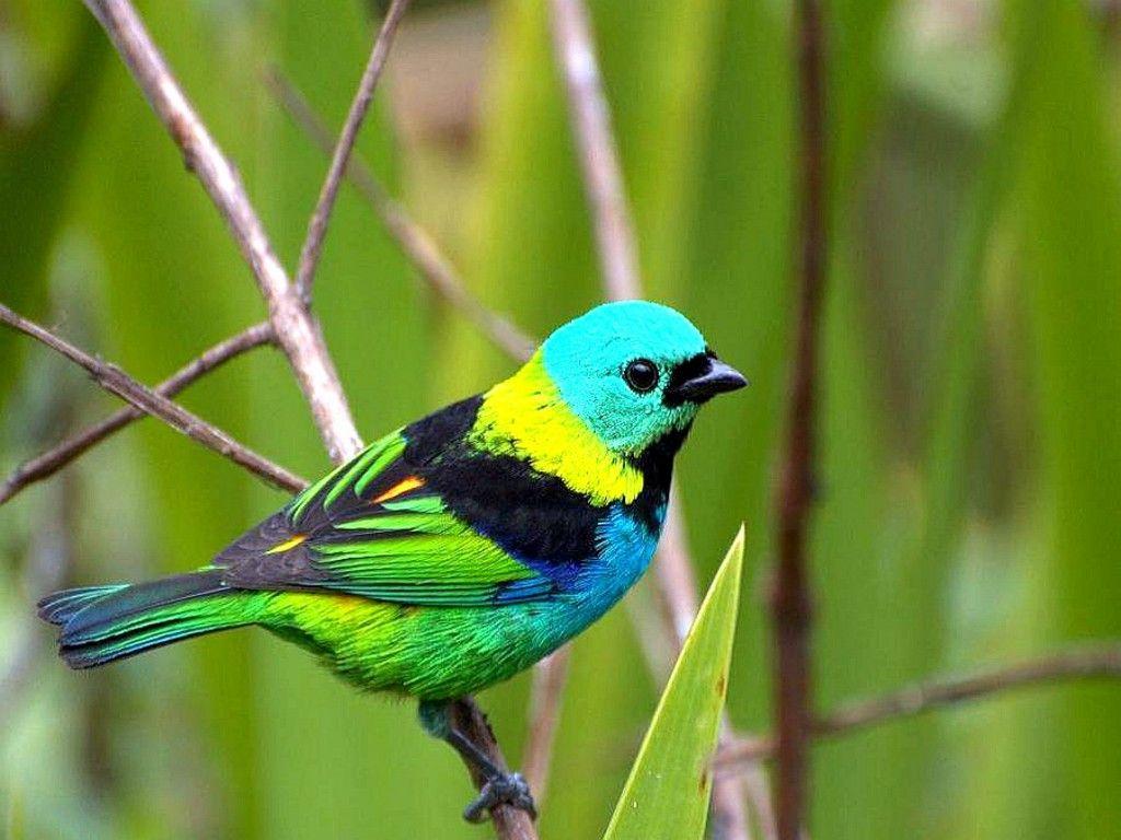 bird wallpaper good download beautiful blue bird wallpaper full