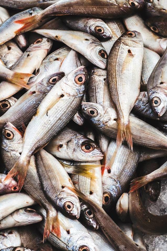 Fresh Fish Fish Art Fish Fish Recipes