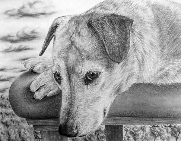 Pin by deepti adhikari on drawing art pinterest realistic drawings draw and amazing pencil drawings