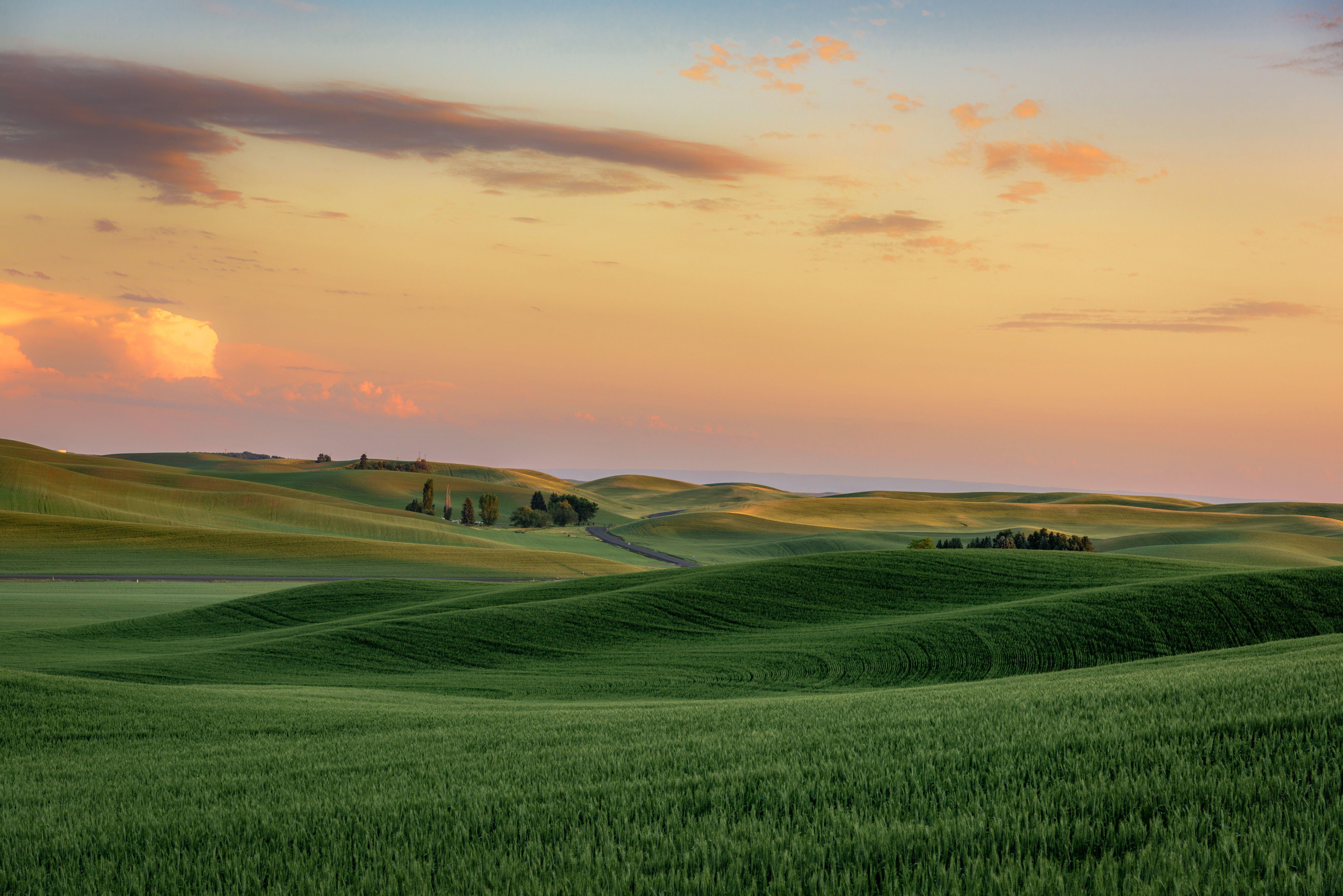 shallow focus photography of green grass field under