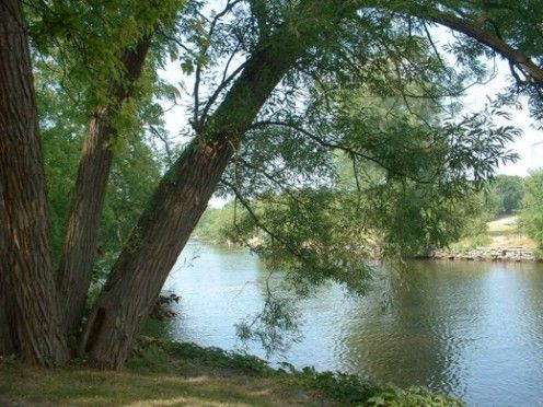 Summer trees by the river.  Photo by timorous