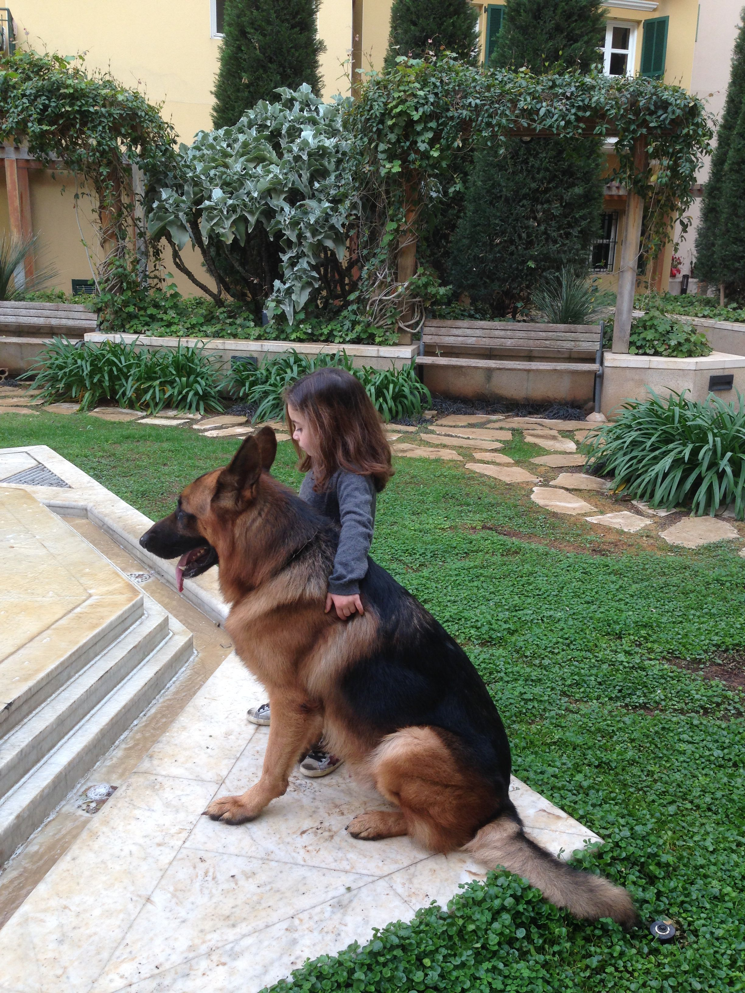 Gold-GSD