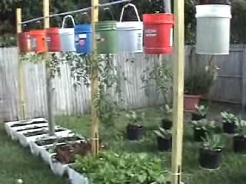 Container Gardening And Hanging Vegetables At The Beginning Of Winter In South  Florida. Hope Ya