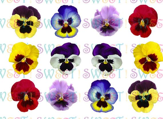 Edible Pansy Cake Cupcake Cookie Toppers Wafer Paper Or Etsy Cupcake Cookies Edible Paper Wafer Paper