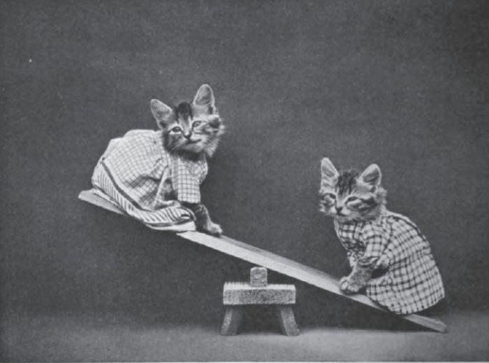 kitties on a seesaw