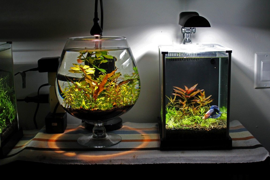 Topic Epiphyte S Fluval Spec 2g Amp Vase 2g Quot Betta Homes Quot 1 4 Planted Space Planted Space