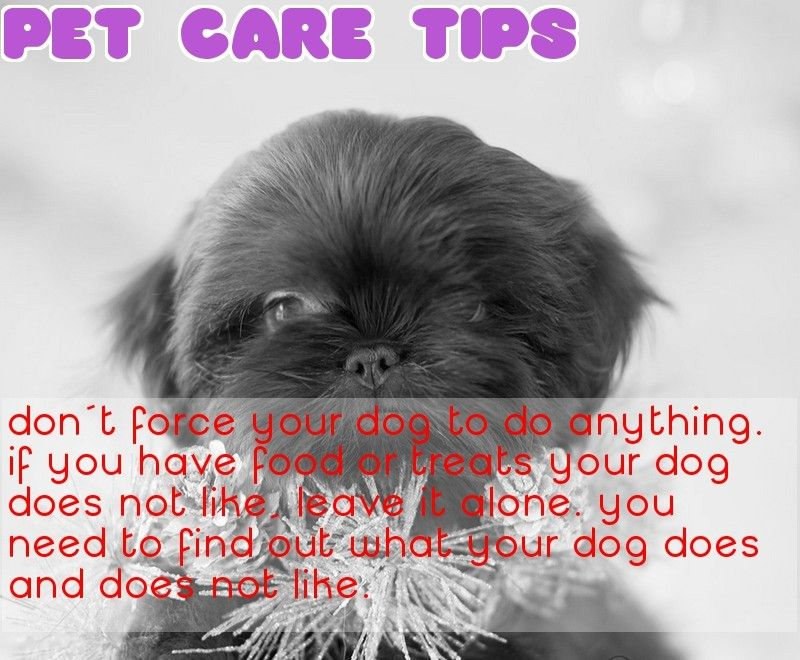 Advice Everyone Should Know About Caring For Dogs Dog Care Dogs