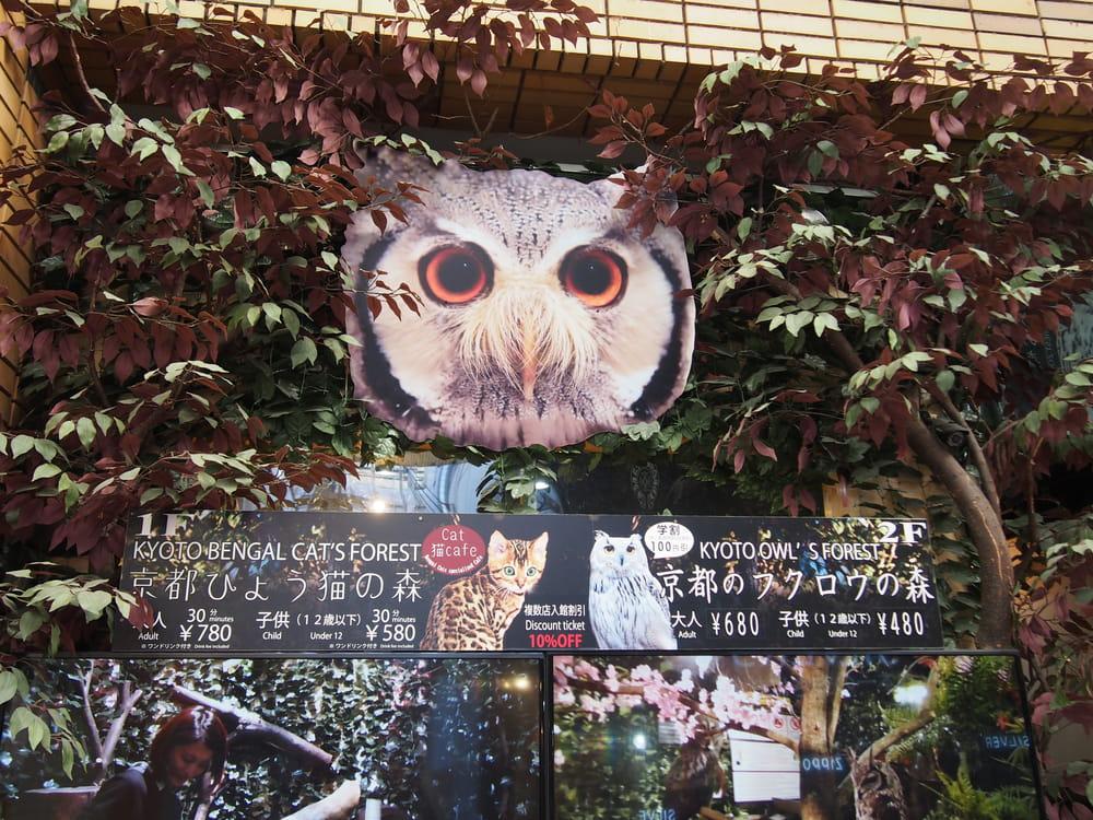 올빼미와 가까이에서 교감하는 「교토 후쿠로노 모리」 | KYOTO MASTERS - 京都マスターズ