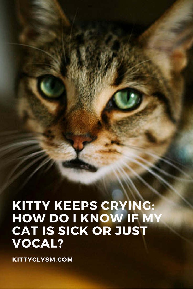 Why Is My Cat Crying Is He Sick Does He Want Something Just Vocal Cat Crying Cat Training Cat Care
