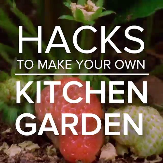 Hacks To Make Your Own Kitchen Garden Backyardgardentips