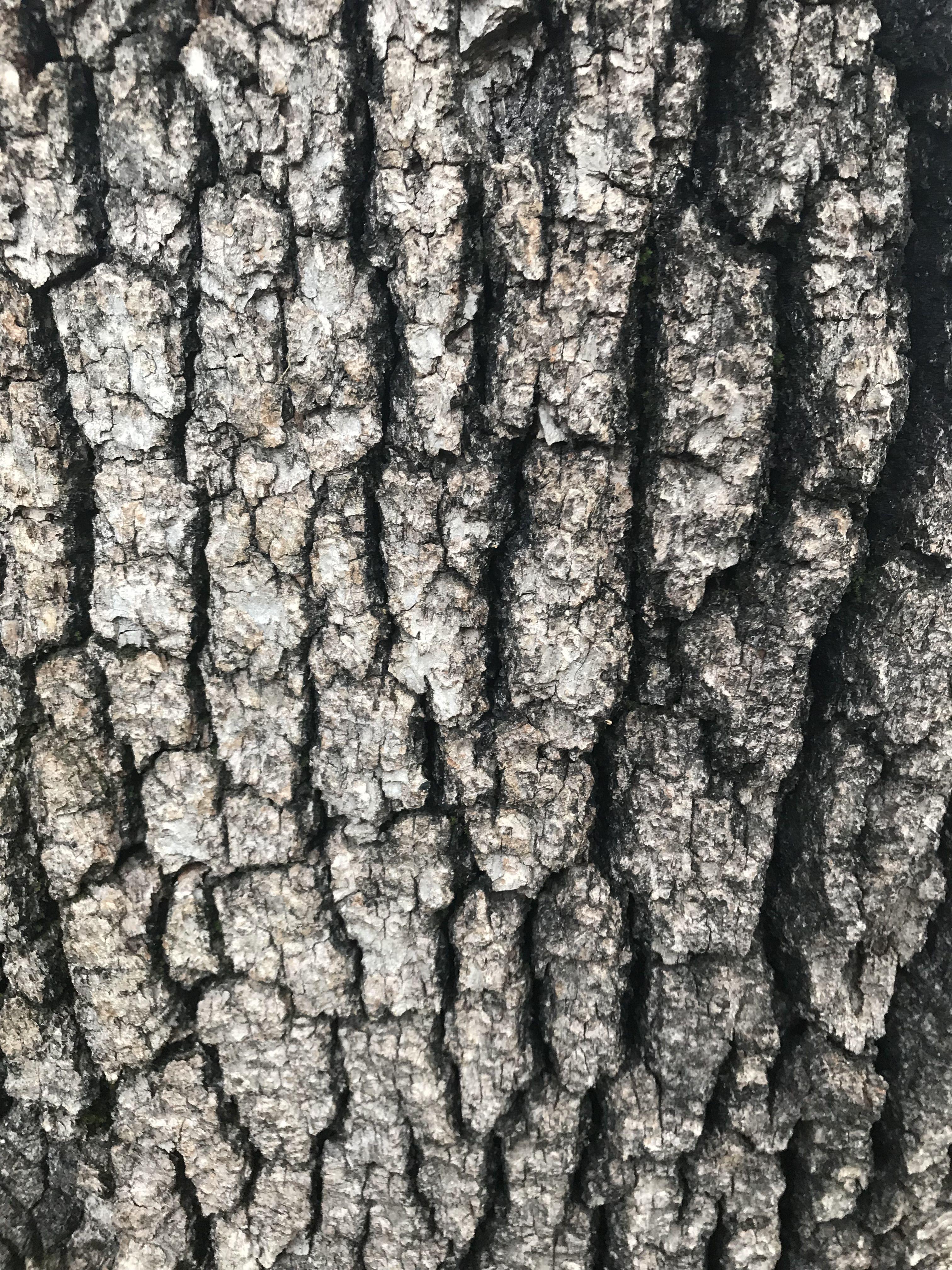 Tree Bark Texture With Images Tree Bark Texture Tree Textures