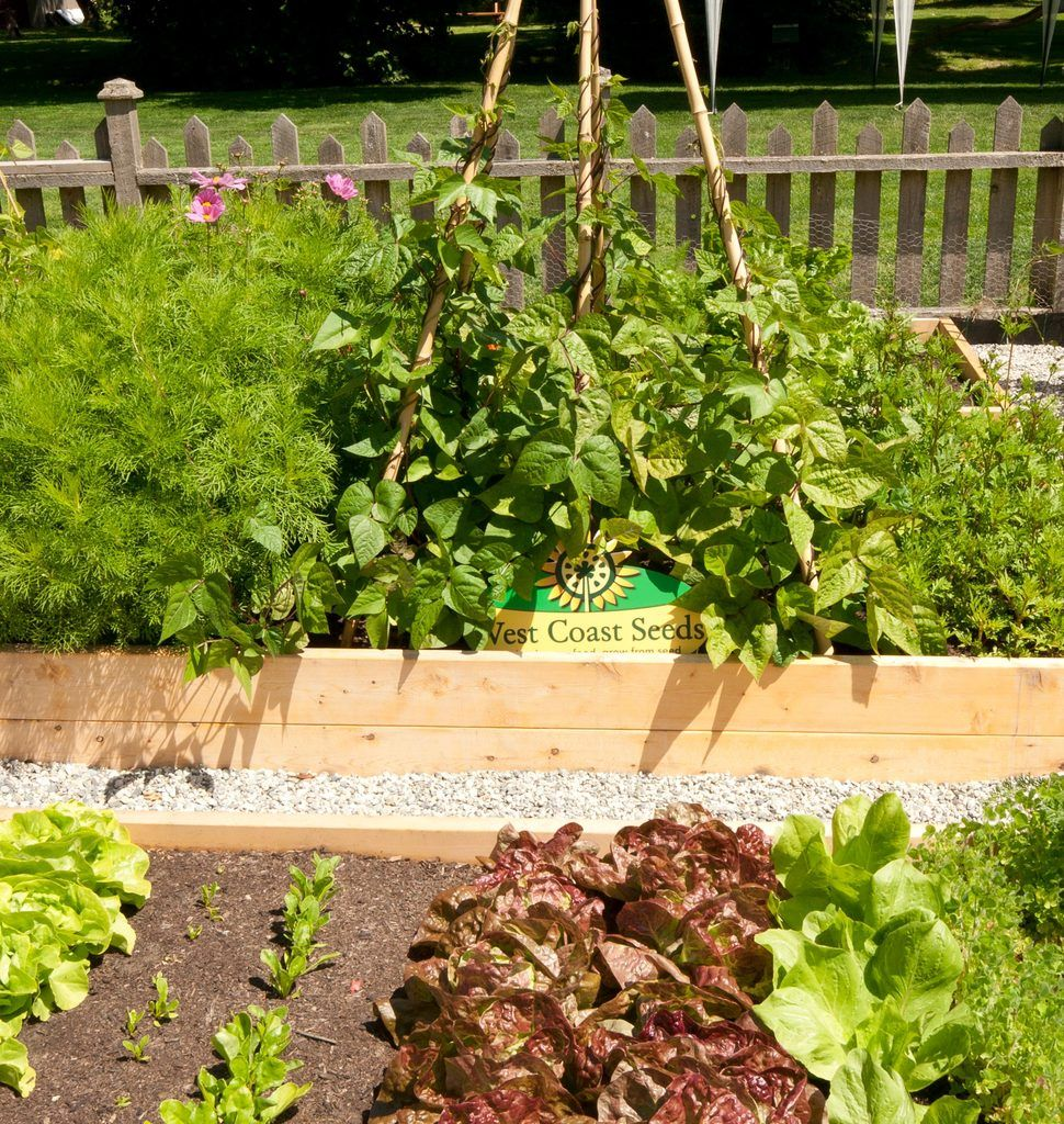 Raised Garden Beds, Building Raised