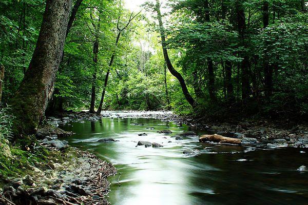 A stream in Hunterdon County, NJ.