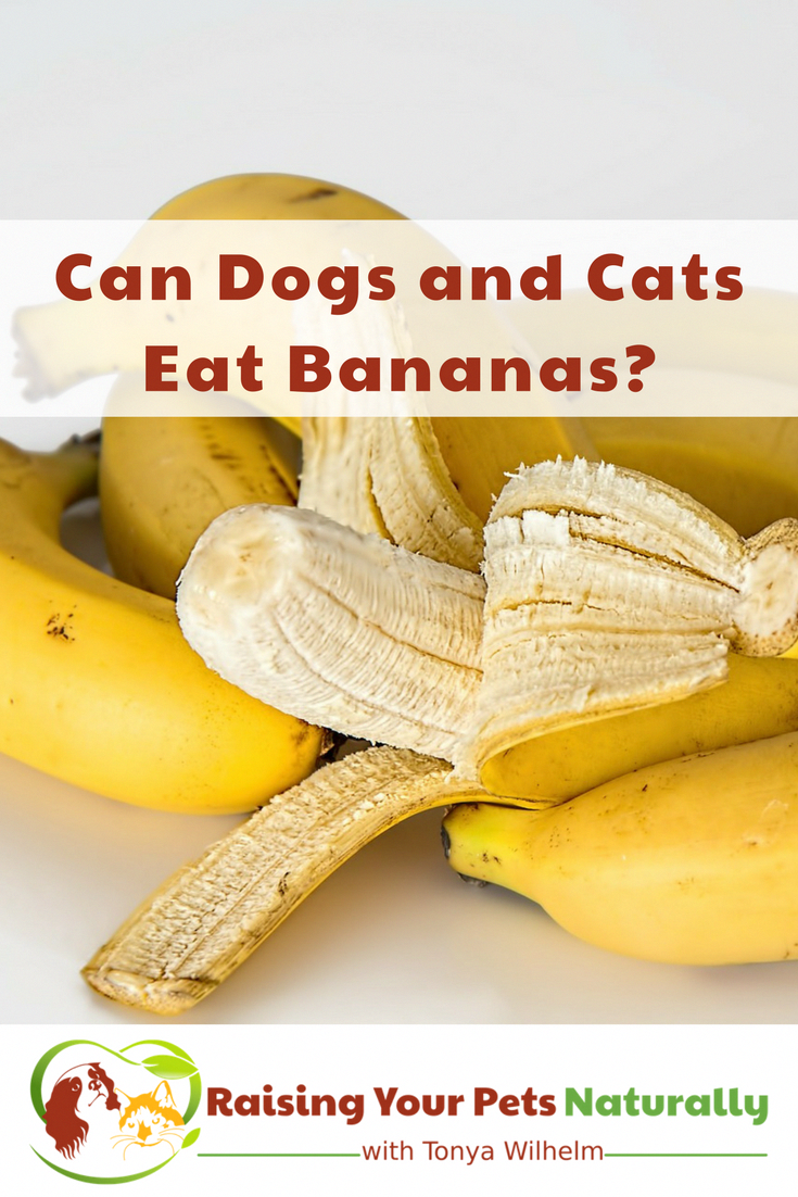 Can Dogs And Cats Eat Bananas Learn Some Of The Health Benefits Of