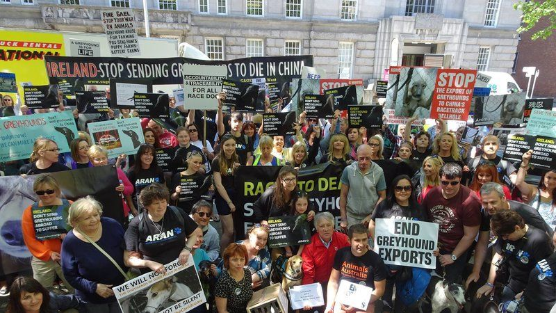 Photos Hundreds Of Greyhounds Rallied For The Greyhounds In Dublin This Week Greyhound Animal Activism Photo